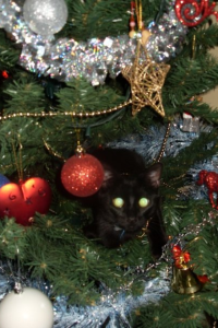 Binx's first chirstmas. 2009. in the tree!
