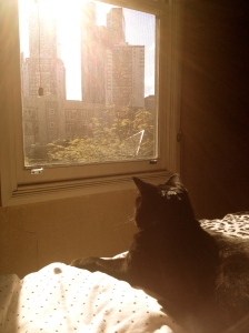 Binx moves to the city.