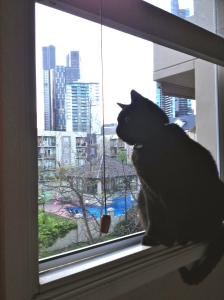 City Cat.