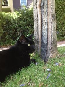 Binx enjoying the Courtyard.