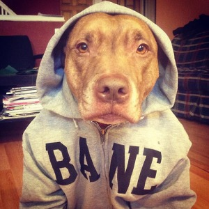 Omfg! Best picture ever. I <3 BANE hoodies.