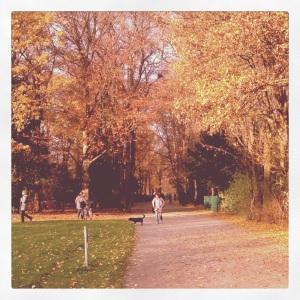 Runs in Hasenheide Park.