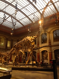 Tallest assembled Dinosaur skeleton in the world.